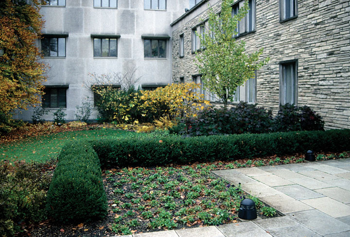 shrubs from chicagoland grows northern charm boxwood